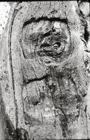 Carved Face in Beaver Post