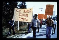Farm Workers Organizing Committee marching to Mukhtiar Growers Ltd in Clearbrook, BC, July 17, 1979.